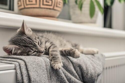 radiátor ár ne szabjon gátat a komfortos meleg lakásnak